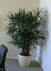 Best Indoor Plants For Medium Light