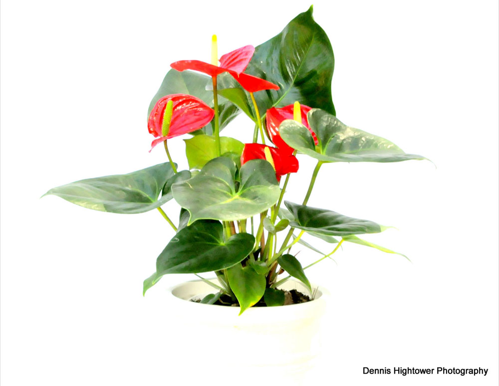 Indoor plants low light indoor plants low light best plants for air quality best plants for - Low light indoor house plants ...