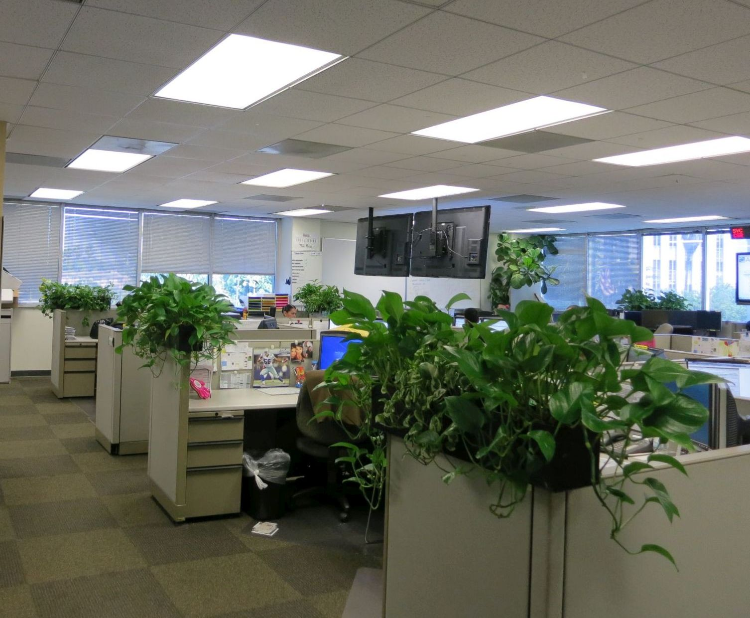 Interior Office Plant Design Beautification Thru Vegetation